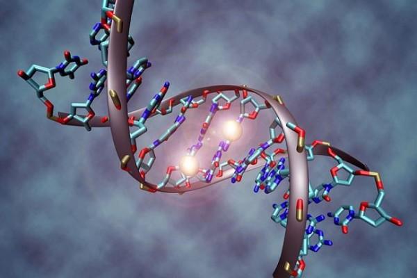 z16477576IE,DNA