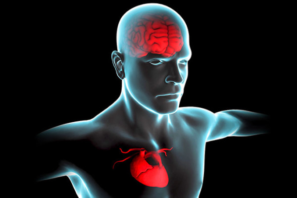 find-out-the-easiest-ways-to-control-over-heart-and-brain-diseases